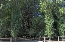 parco 3